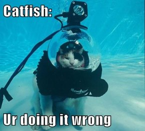 Catfish:  Ur doing it wrong