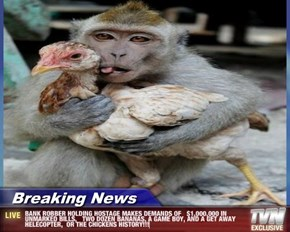 Breaking News - BANK ROBBER HOLDING HOSTAGE MAKES DEMANDS OF   $1,000,000 IN UNMARKED BILLS,   TWO DOZEN BANANAS, A GAME BOY, AND A GET AWAY HELECOPTER,  OR THE CHICKENS HISTORY!!!