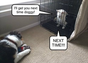 I'll get you next time doggy!