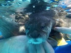 Under-Otter
