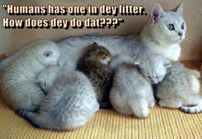 """Humans has one in dey litter.                                    How does dey do dat???"""