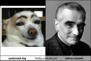 eyebrowed dog Totally Looks Like martin scorsese