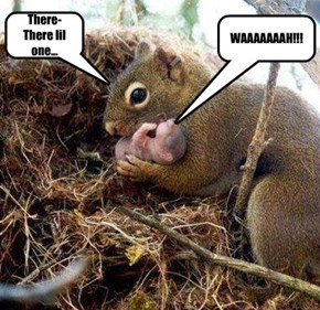 Baby Squirrel and Mom