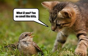 What IZ you? You no smell like kitty.