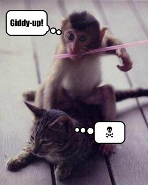 And ya wonder why kitties hate monkeys