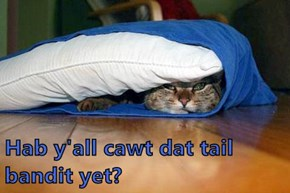Hab y'all cawt dat tail bandit yet?