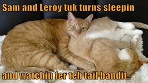 Sam and Leroy tuk turns sleepin  and watchin fer teh tail bandit..