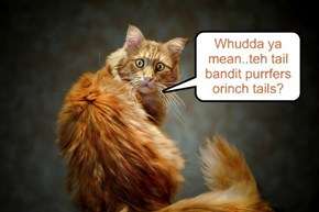 Whudda ya mean..teh tail bandit purrfers orinch tails?