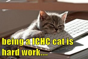 being a ICHC cat is hard work....