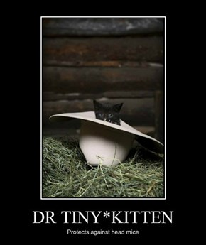 DR TINY*KITTEN