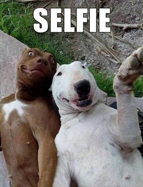 Dogs Get in on the Selfie Action
