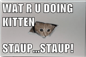 WAT R U DOING KITTEN  STAUP...STAUP!