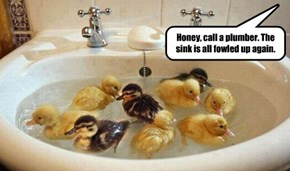 Those Ducklings are in Cahoots with the Plumber...