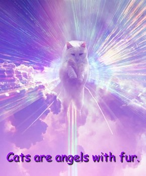 Cats are angels with fur.