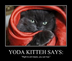 YODA KITTEH SAYS: