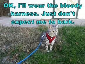 OK, I'll wear the bloody harness. Just don't expect me to bark.