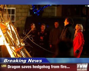 Breaking News - Dragon saves hedgehog from fire...