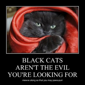 BLACK CATS AREN'T THE EVIL YOU'RE LOOKING FOR