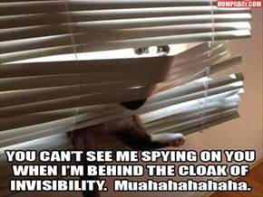 Never Mind That Cat Behind the Curtains!