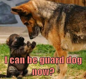 I can be guard dog now?