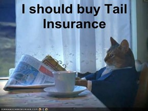I should buy Tail Insurance