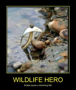 WILDLIFE HERO