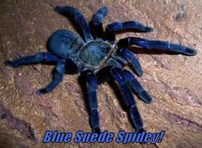 Blue Suede Spidey!