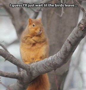 Those Crummy Birds are Always in my Squirrel Feeder!