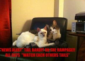 """NEWS ALERT"" TAIL BANDIT ON THE RAMPAGE!! ALL CATS  ""WATCH EACH OTHERS TAILS"""