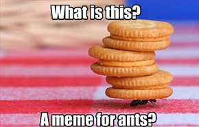 A Meme for Ants Indeed!