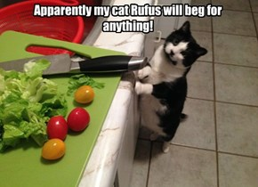 Rufus wants Ruffage