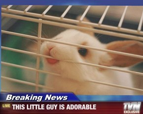 Breaking News - THIS LITTLE GUY IS ADORABLE