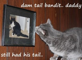 dam tail bandit.. daddy  still had his tail..