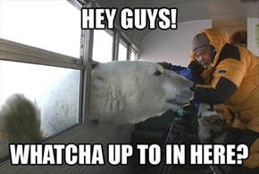 Got Any Polar Noms?