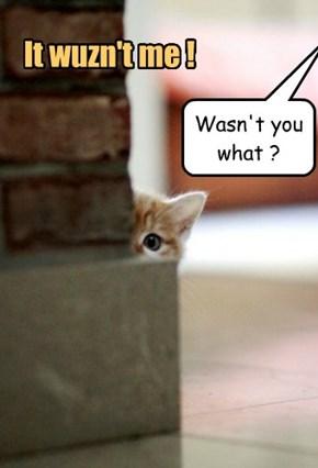 It wuzn't me !