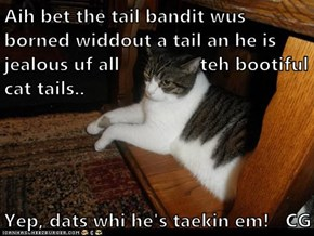Aih bet the tail bandit wus borned widdout a tail an he is jealous uf all               teh bootiful cat tails..  Yep, dats whi he's taekin em!   CG