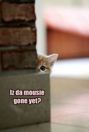 Iz da mousie gone yet?