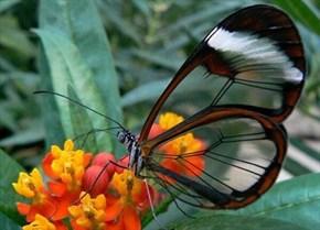 Transparent Beauty