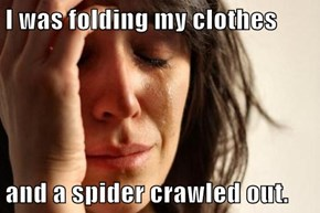 I was folding my clothes  and a spider crawled out.