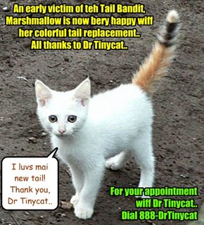 Due to teh Tail Bandit's activities, Dr Tinycat is doing a brisk Tail Replacement bizness.. Here's a popular ad dat Krafty Katt made for Dr Tinycat..