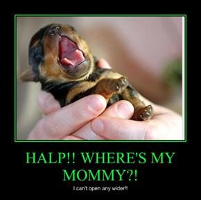 HALP!! WHERE'S MY MOMMY?!