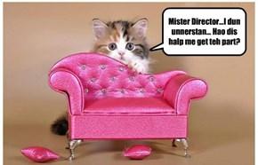 Catsing Cowch?