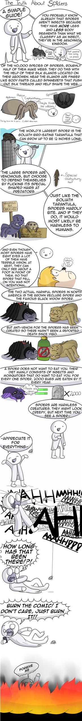 The Truth About Spiders