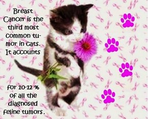 Breast-Tober  http://catexpert.blogspot.com/2010/07/mammary-tumors-in-cats-are-bad-bad-bad.html