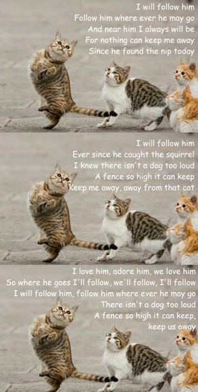 I will follow him