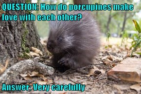 QUESTION: How do porcupines make love with each other?  Answer: Very carefully