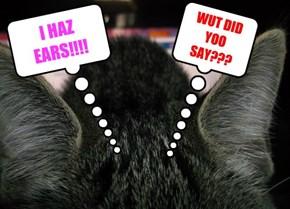 I HAZ  EARS!!!!