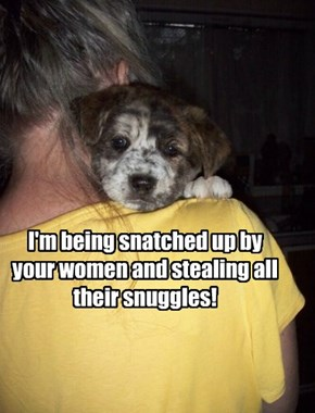 I'm being snatched up by your women and stealing all their snuggles!