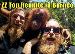 ZZ Top Reunite in Borneo