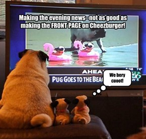 Making the Front Page of Cheezburger while Making the Evening News
